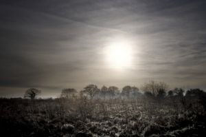 Winter Sun by Richard Osbourne