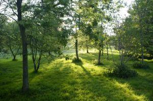 Morning Sunlight by Richard Osbourne