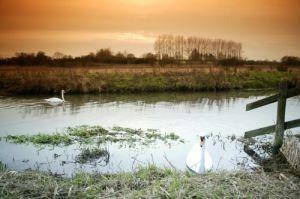 Norfolk Marshes by Richard Osbourne