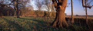 Winter Afternoon by Richard Osbourne