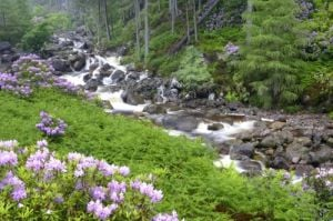 Mountain Stream - Scotland by Richard Osbourne
