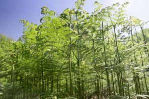 Ferns Norfolk Broads by Richard Osbourne