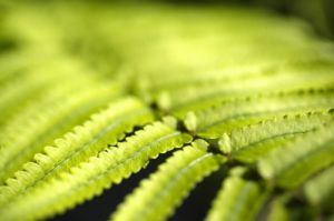 Fern Close Up by Richard Osbourne