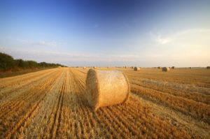 Harvest by Richard Osbourne