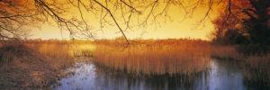 Ted Ellis Nature Reserve, Norfolk by Richard Osbourne