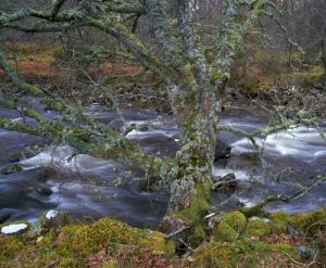 River Talladale, Highlands, Scotland by Richard Osbourne