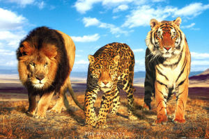 Wild Cats by Anonymous