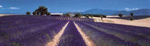 Lavender, Provence, France by Koji Yamashita