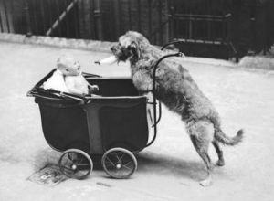 Canine Nurse by Babies Collection
