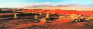 Namib Naukluft Park, Namibia by Lee Frost