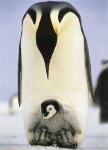 Mom's Care by Cuccioli