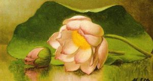 Lotus Blossom, 1885-95 by Martin Johnson Heade