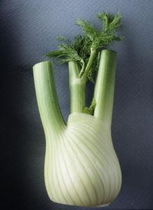 Foeniculum vulgare azoricum, Fennel bulb, Florence fennel by Ashton
