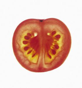 Lycopersicon esculentum, Tomato by Carol Sharp