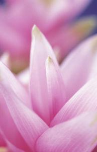 Petals by Dave Zubraski