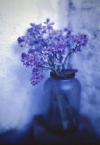 Hyacinthoides, Bluebell by Gill Orsman
