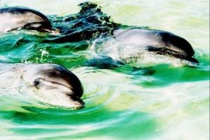 Three dolphins, 1993 by Mirrorpix