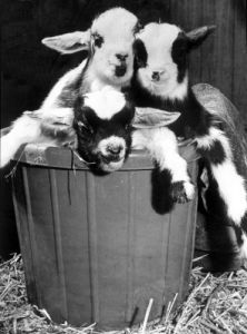 A basket full of trouble by Mirrorpix