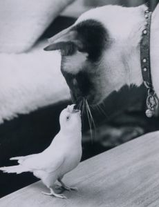 Snowy the budgie makes friends by Mirrorpix