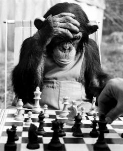The Champion Chimps Pepe, 1954 by Mirrorpix