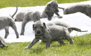 Puppies born in Urmston by Mirrorpix