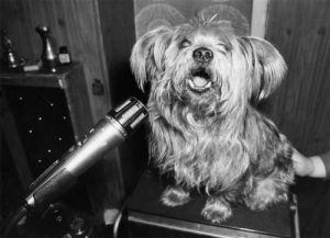 Dogs, 1979 by Mirrorpix