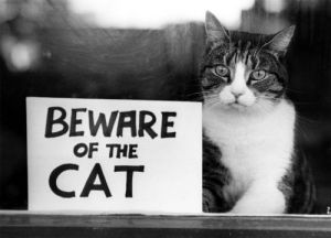Beware of the cat by Mirrorpix