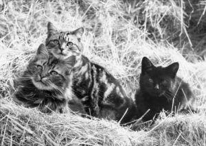 Kittens by Mirrorpix