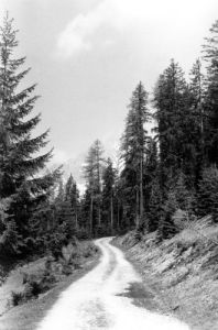 Forest path near Filzmoos by Mirrorpix