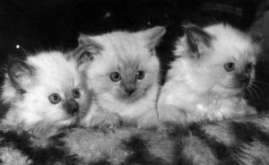 Three tiny kittens by Mirrorpix