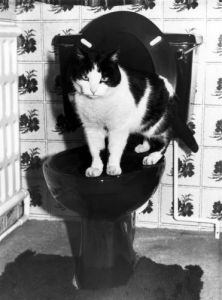Pet cat on the toilet by Mirrorpix
