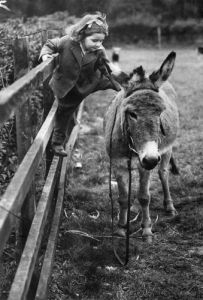 Girl stroking a donkey by Mirrorpix