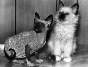 Bring up Kojak on cat's back by Mirrorpix