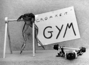 Frogs Gym by Mirrorpix
