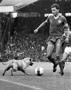Leicester's Larry May duels for the ball with a dog by Mirrorpix