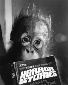 Not enough to make an orang-utan's hair stand on end by Mirrorpix