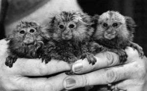 Gremlins! They're cute, they're furry by Mirrorpix