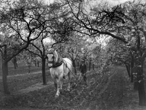 Farming Orchard by Mirrorpix