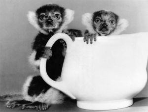 Tea for two at the Zoo by Mirrorpix