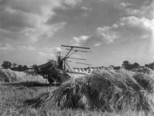 Harvest scene near Thaxted, Essex by Mirrorpix