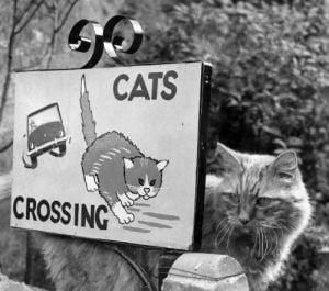 Sign Cat Crossing by Mirrorpix