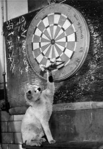 Snowball pulls the darts out for the players by Mirrorpix