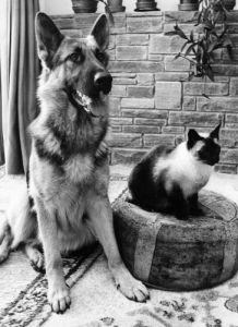 Chico the Alsatian and Chen the cat by Mirrorpix