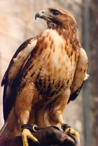 Bird of prey by Mirrorpix