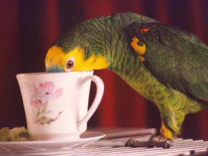 Bosun the parrot by Mirrorpix