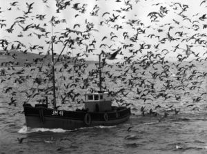 Fishermen of Brixham by Mirrorpix