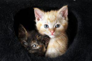 Feral kittens by Mirrorpix