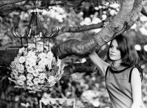 Natalie Wood by Mirrorpix