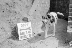 Air Raid Shelter, 1940 by Mirrorpix