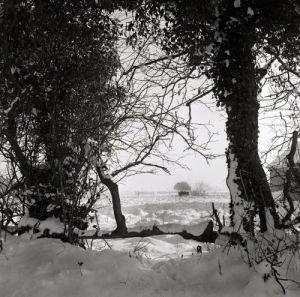 Snow scene at Sandy Hatch lane by Mirrorpix